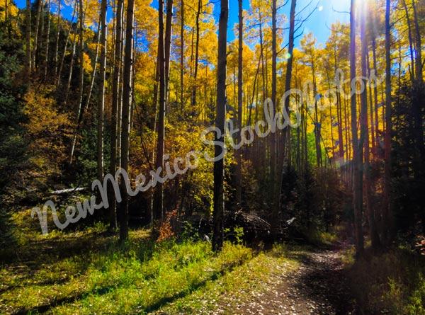 Outside Taos: Aspen Stand I