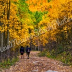 Fall: Hiking Aspen Vista III