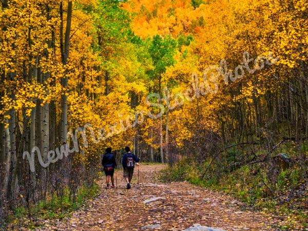 Fall: Hiking Aspen Vista III