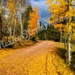Fall: Jemez Aspens II