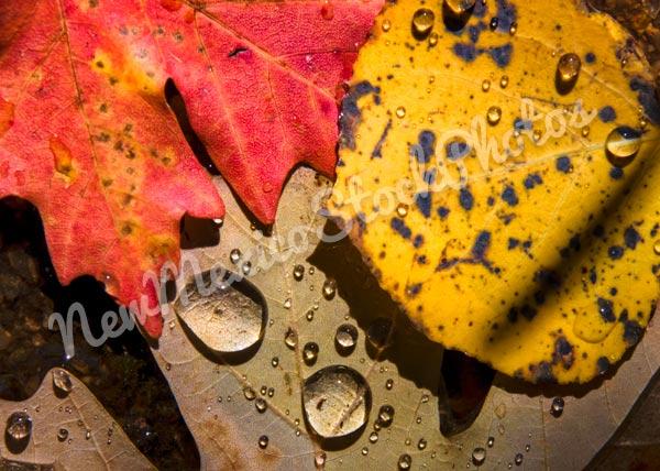 Fall: Leaves in a Stream V